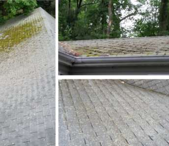 Do you have Mildew or Mold on your Roof?